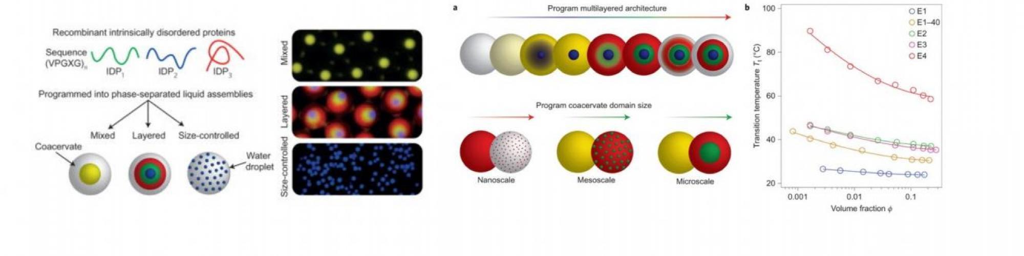 Programming molecular self-assembly